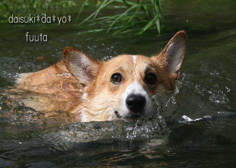 fuuta088311.jpg