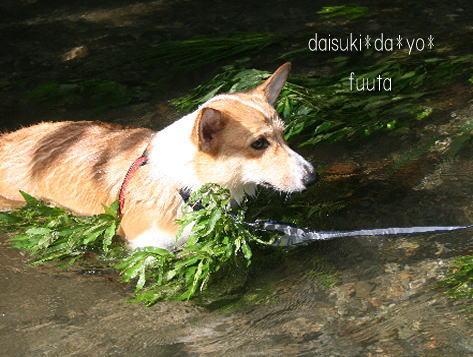 fuuta0883151.jpg