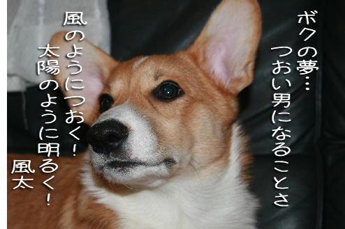 fuuta1122.jpg