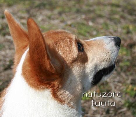 fuuta313.jpg