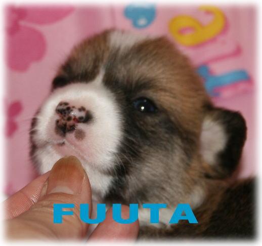 fuuta729.jpg