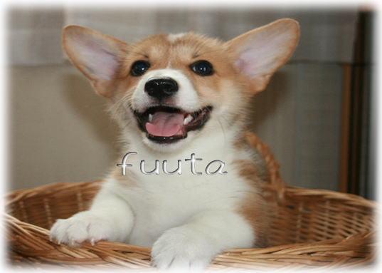 fuuta914.jpg