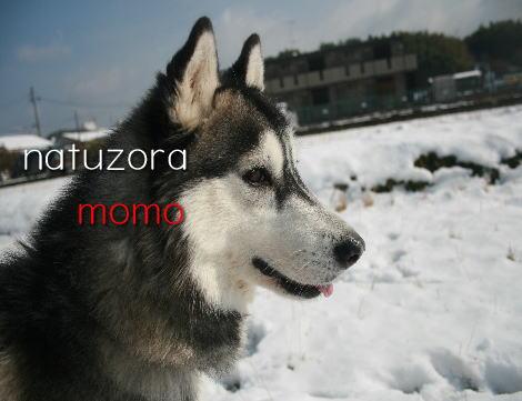 momo2101.jpg