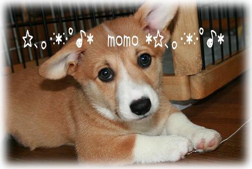 momo91811.jpg