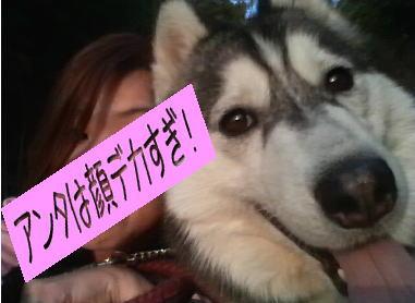 momoyuki.jpg