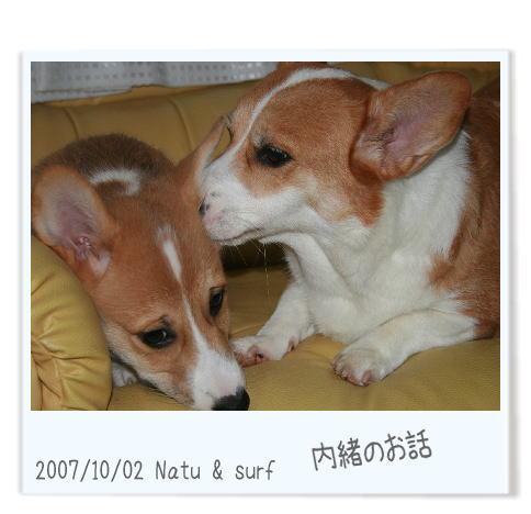 natusaafu102.jpg