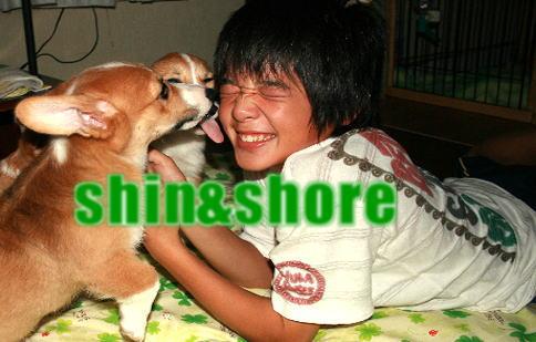 shinsyoa.jpg