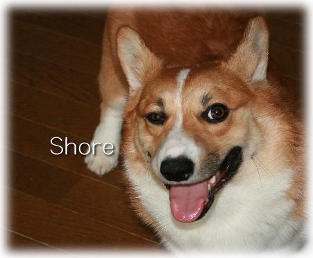 shore0873.jpg