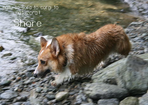 shore08865.jpg