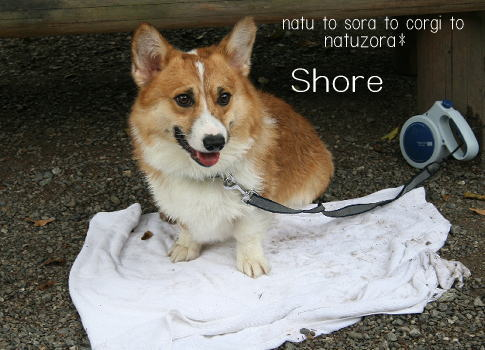 shore08866.jpg