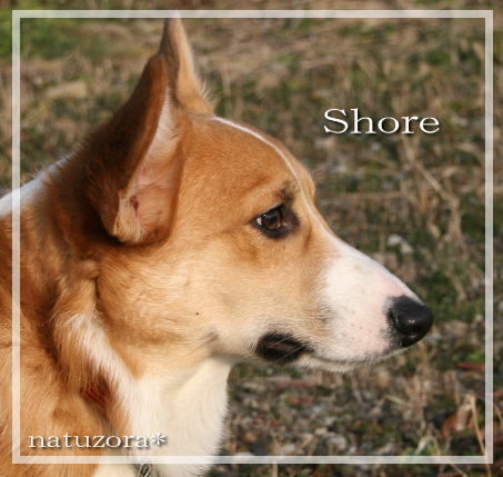 shore108.jpg