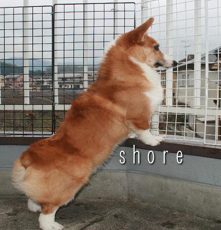 shore212.jpg