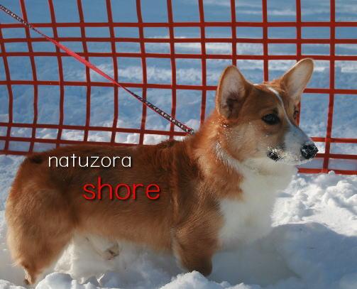 shore33.jpg