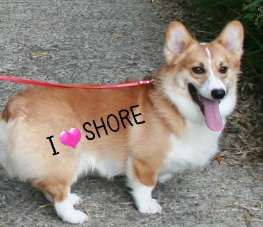 shore5181.jpg