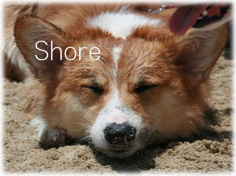 shore611.jpg