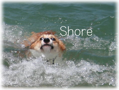 shore612.jpg