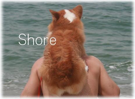 shore613.jpg
