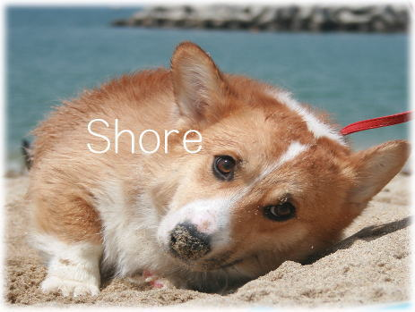 shore614.jpg