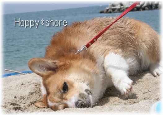 shore6661.jpg