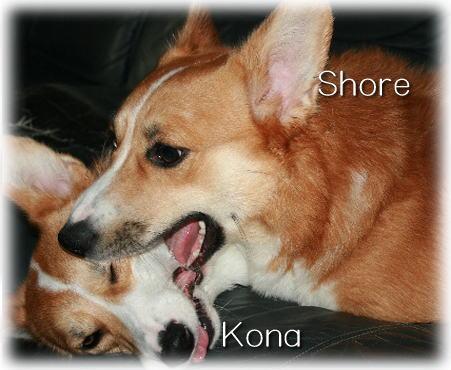shorekona08732.jpg