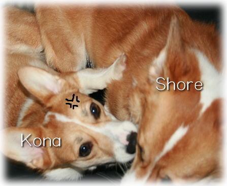 shorekona08733.jpg