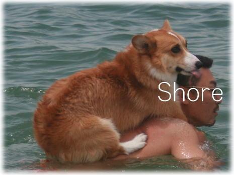 shoreroy611.jpg