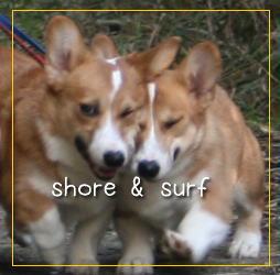 shoresurf108.jpg