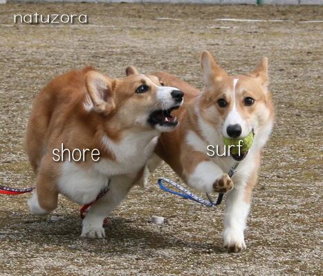 shoresurf31.jpg