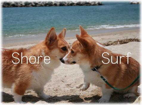 shoresurf611.jpg