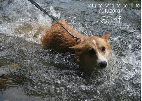 surf08861.jpg