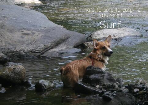 surf08862.jpg