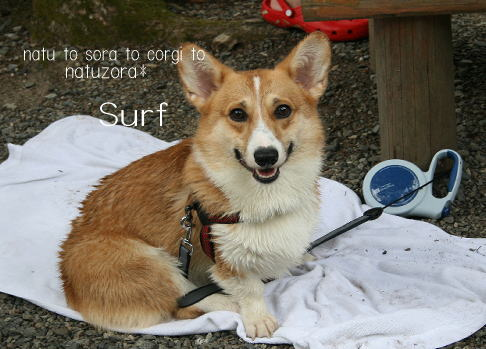 surf08865.jpg