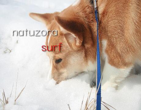 surf2102.jpg