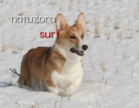 surf2103.jpg