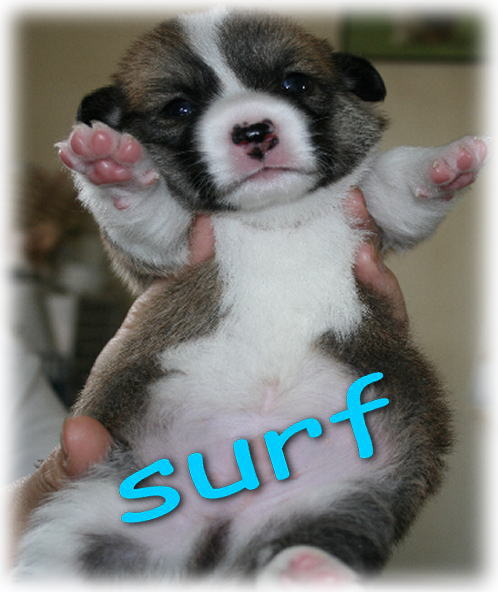 surf728.jpg