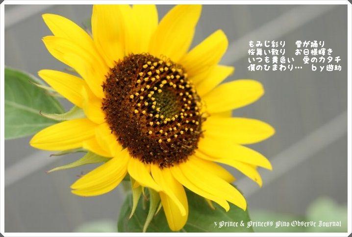 IMG_7540_20090806194942.jpg