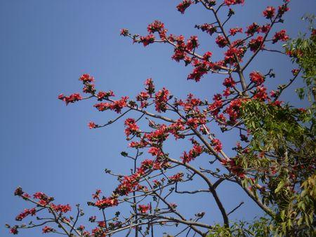 cottontree020308.jpg