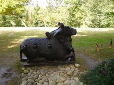 cow-ananda.jpg