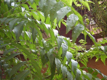 monsoon-currypatte08.jpg
