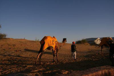 osian-camel2.jpg