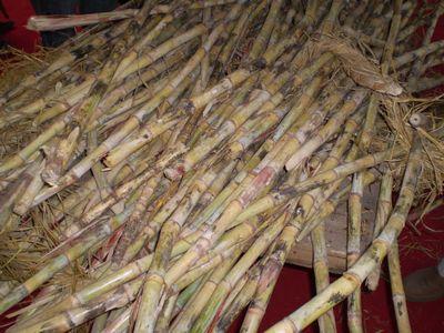 punjab-sugarcane.jpg