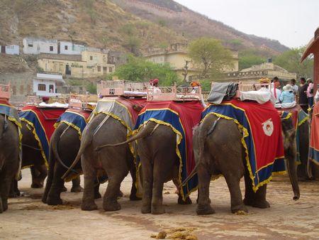 ss-elephantback.jpg