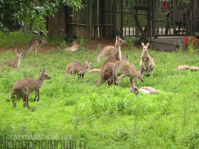 kangol1.jpg