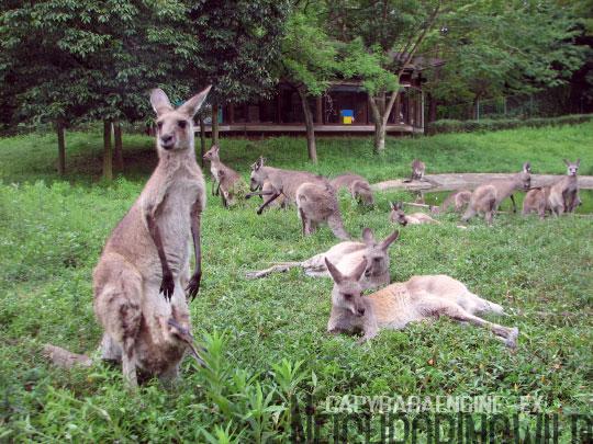 kangol2.jpg