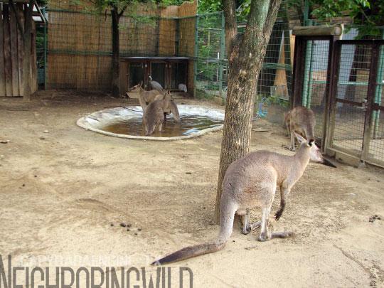 kangol3.jpg
