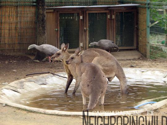 kangol5.jpg