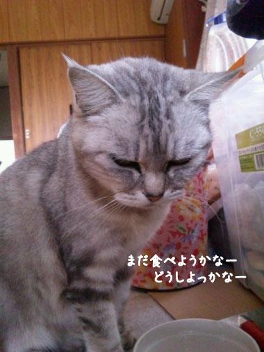 マリアちゃん-3