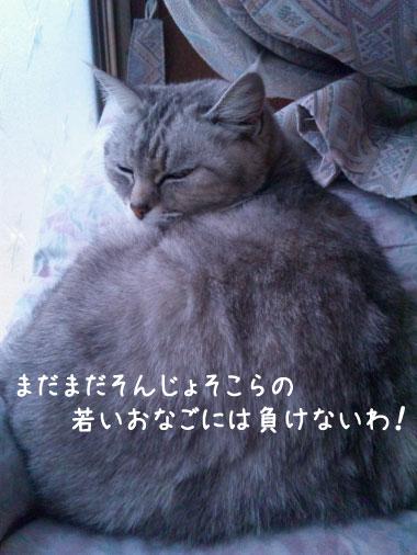 マリアちゃん-4