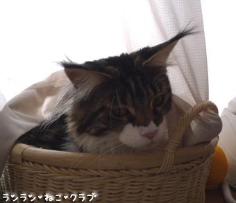 20081220maron1.jpg