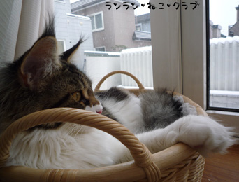 20081220maron4.jpg